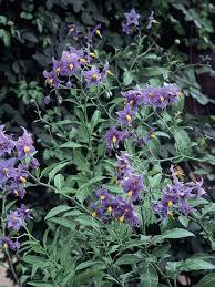 popular flowers for gardens flowers ideas