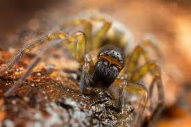 how to take amazing spider macro photos nature ttl