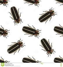 firefly beetle lampyridae sketch of firefly vector illustration
