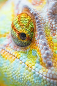 Amazing Pictures Of Nature by Best 20 Amazing Pictures Ideas On Pinterest Amazing Photography