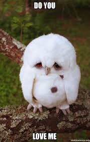 You Love Me Meme - do you love me sad owl make a meme