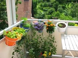 potted container garden on the move in a wheel barrow creative