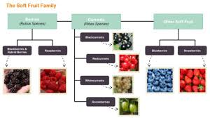 Fruit Family Tree
