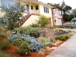 growing california native plants landscaping is easy