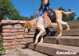 Mobility Stairs by Help Dogs Walk Up U0026 Down Stairs Senior Disabled Or Recovering