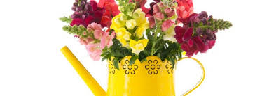 potted flowers category archive for potted flowers plants grow plants in pots