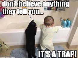 It S A Trap Meme - it s a trap cat memes and comics