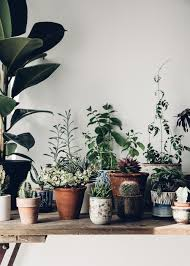 plants for the house photo journal our oases plants creative and spaces