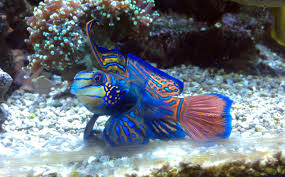 saw this beatiful fish in a saltwater aquarium does anyone know