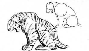 how to draw a tiger tiger facts and information