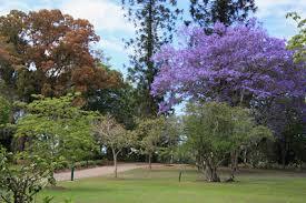 City Botanic Gardens City Botanic Gardens Brisbane Lesleybray