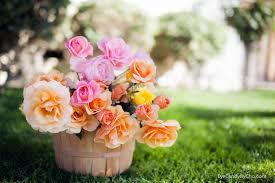 November Flowers Cho Mon Kyaw Photography Last Weeks Of Fresh Flowers