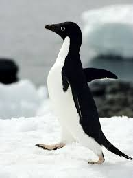 antarctic animal pictures national geographic