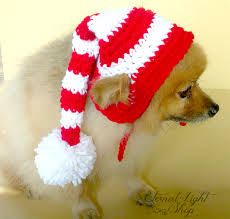 30 extraordinary christmas pet clothes and accessories style