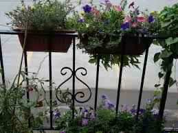collection plants for apartment balcony photos free home