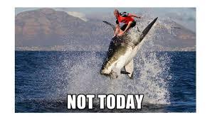 Shark Attack Meme - mick fanning memes tracks magazine the surfers bible where