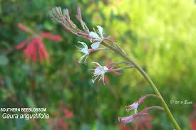 florida native plants what florida native plant is blooming today daily photo of