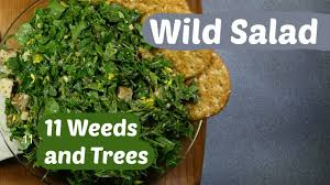 foraging a wild edible salad with 11 common spring weeds tree