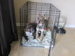 Dog Crate With Bathroom by Crate Training Questions
