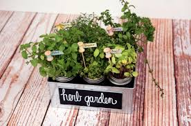 Herb Garden Gift Ideas 8 Diy Herb Garden Gifts Diy Gifts For Foodies Week Two