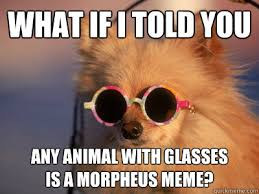 Dog With Glasses Meme - what if i told you any animal with glasses is a morpheus meme