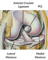 Knee Compartments Anatomy The Orthopaedic Speciality Clinic