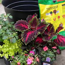 Patio Container Garden Ideas South Central Gardening Container Garden Ideas For Tx And Ok