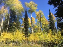 Utah forest images Forests ranger districts in southern utah burst with color jpg