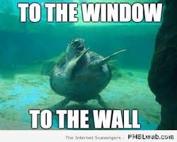 Turtle Meme - 30 turtle meme pmslweb