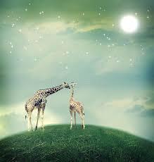 imagenes de amistad jirafas jirafas en imagen de la amistad o del concepto del amor stock de