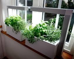 Grow Lights For Indoor Herb Garden - growing herbs indoors how to grow herb plants indoors