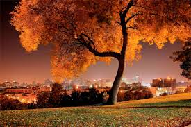 30 naturally stunning pictures of trees naldz graphics
