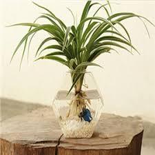 Wall Mounted Glass Flower Vases Creative Flower Vase U0026 Glass Wall Vase Beddinginn Com