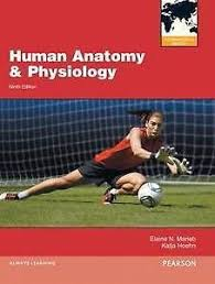 Anatomy And Physiology By Ross And Wilson Pdf Free Download Dr Knowledge Human Anatomy U0026 Physiology 9th Edition By Marieb