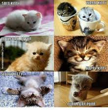 Sleepy Cat Meme - soft kitty sleepy kitty warm kitty happy kitty purr purr purr