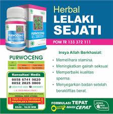 purwoceng obat herbal alami stamina tahan kuat lama pria ejakulasi