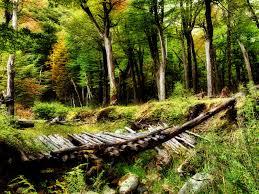 broken bridge forest hd desktop wallpaper nature and landscape