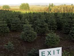 Cutting Christmas Tree - where to get you cut christmas trees in salem area