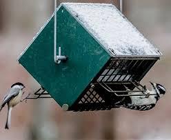 bird feeding tips by rollerfeeder
