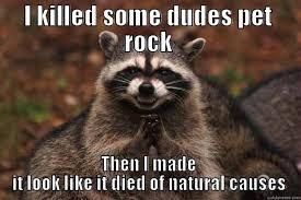 Pet Rock Meme - pet rock that i killed quickmeme