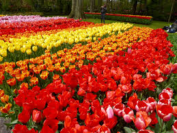 keukenhof the best place to experience a european spring nomes