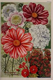 61 best seed packets images on pinterest seed catalogs vintage