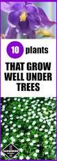 best 25 annual plants ideas on pinterest butterfly plants the