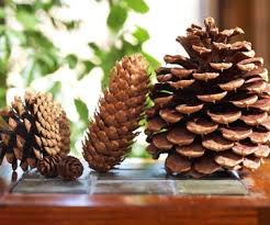 easy project to decorate with pinecones
