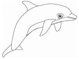 coloring pages surprising dolphin pictures color coloring