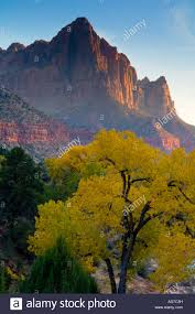 Utah vegetaion images The watchman over cottonwood tree in fall zion national park utah jpg
