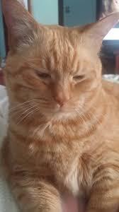 happy birthday cat tax album on imgur