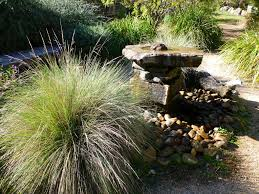 native plant nursery sydney water features and native plants gardening with angus