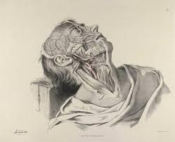 Human Body Anatomy Pics Historical Anatomies On The Web Richard Quain Home