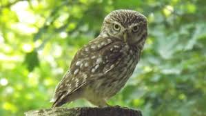 what does the owl symbolize for egyptians reference com